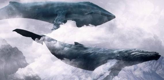 """В Херсоне """"киты"""" ведут подростков к самоубийству"""