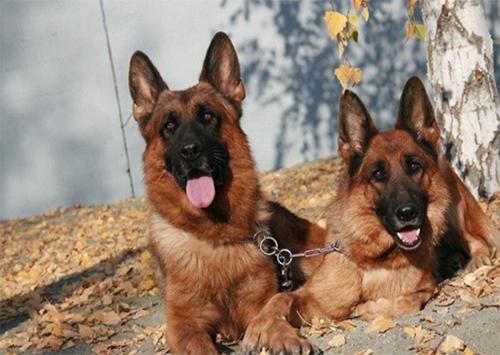 Российские собаки на Херсонщине стали не выездными